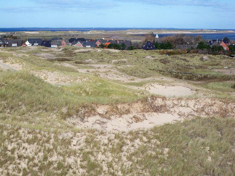 Amrum Odde