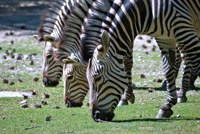 Im Frankfurter Zoo leben bis zu 450 verschiedene Tierarten