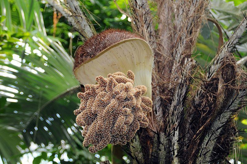 Der Palmengarten ist eine entspannte Oase in der Großstadt