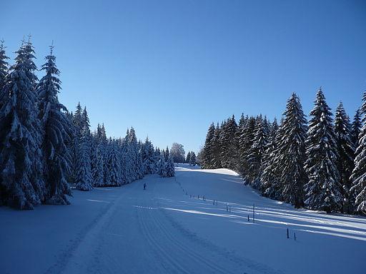 Bergwelt Schauinsland