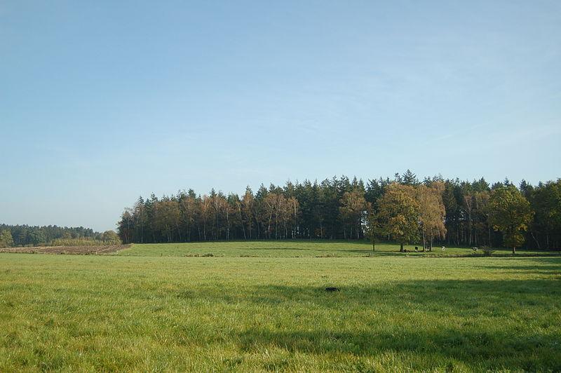 Lutzhorn
