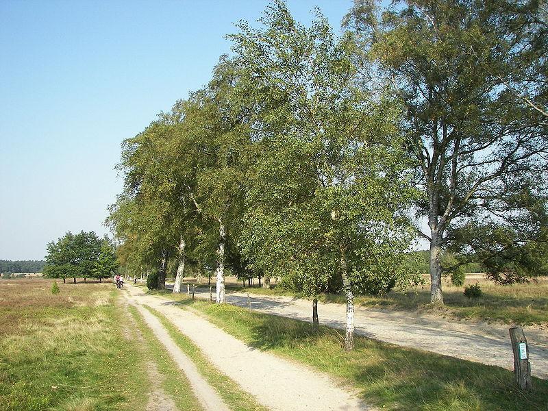 Toppenstedt