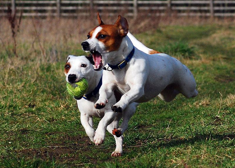 coole hunde spiele