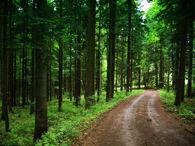 Schwarzwald Wanderweg