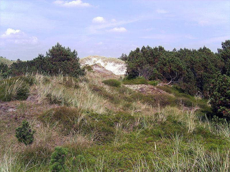 Landschaft auf Eiderstedt