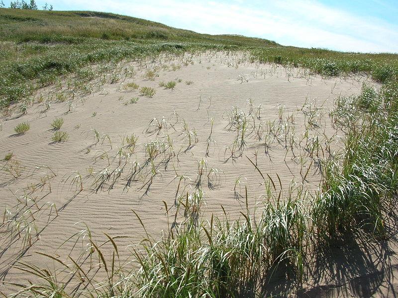 Shifting sand dune
