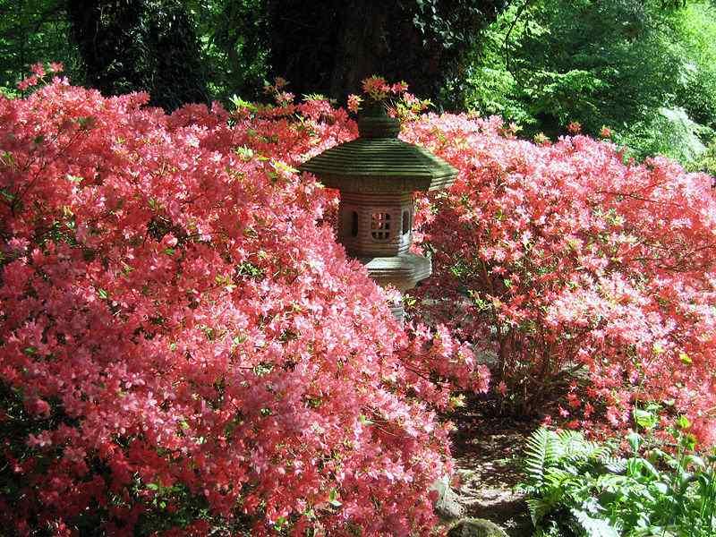 Bremer Rhododendronpark