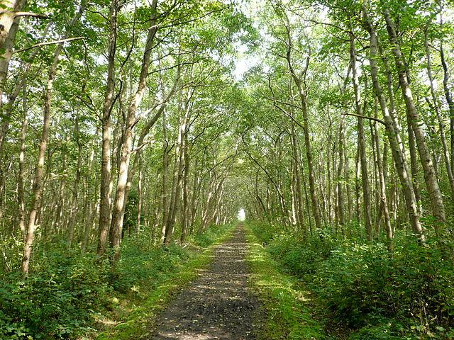 Langeooger Wald