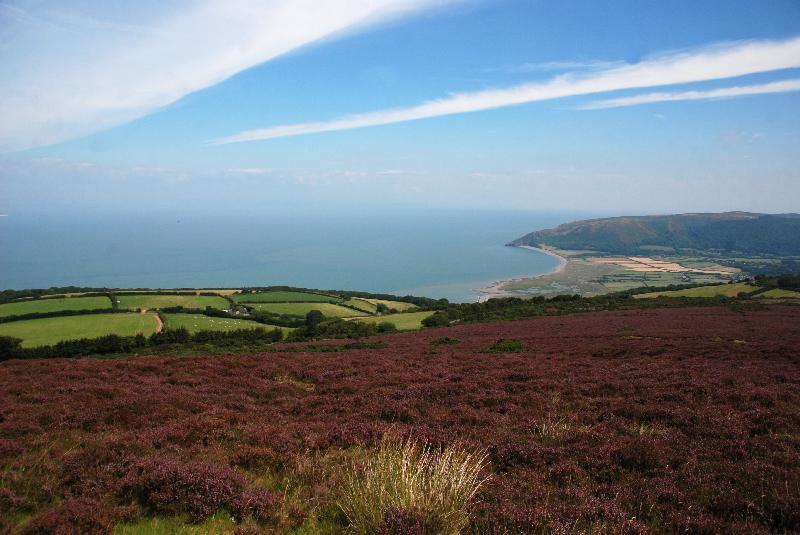 Heidelandschaft in Devon