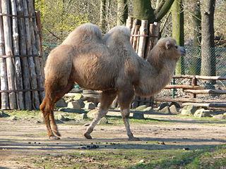 Der Tierpark in Angermünde