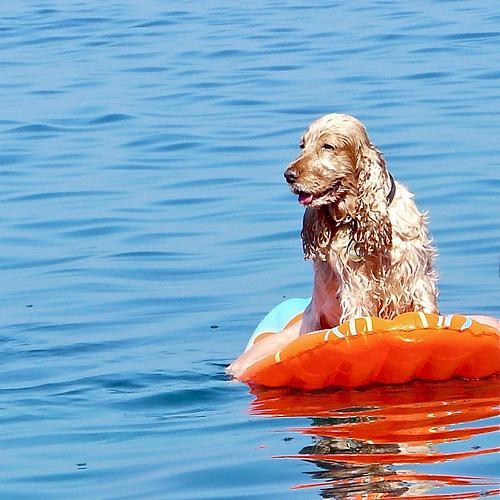 Urlaub mit Hund auf Hiddensee
