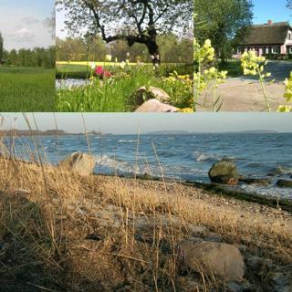 Hof Rügentreu - Reetdach-Oase - EG Wohnung - Rosengarten - Garz