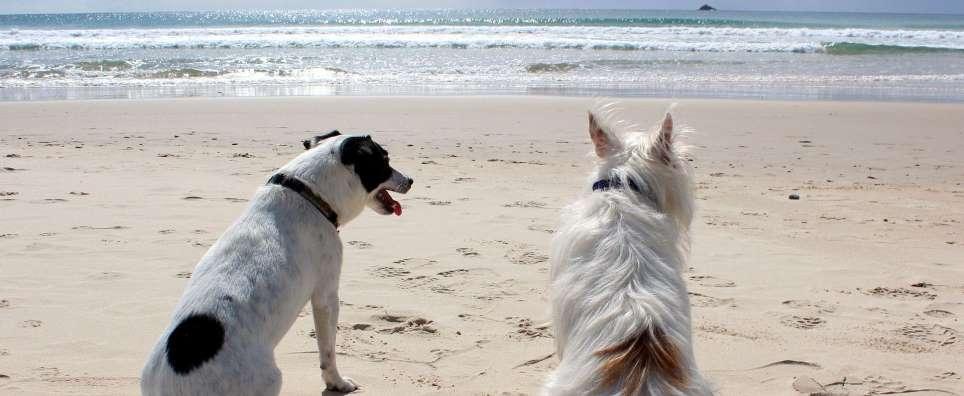 Beliebte Reiseziele mit Hund: Sylt