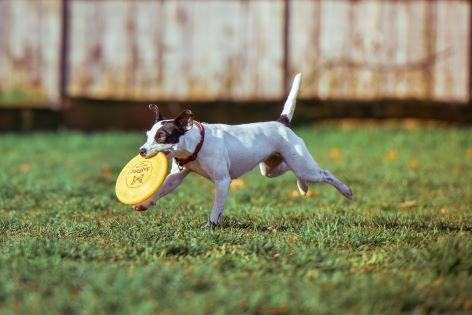 Hundestrände Föhr