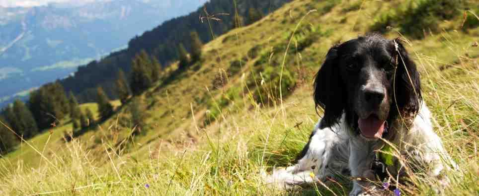 Beliebte Reiseziele mit Hund: Bayern