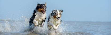 Die schönesten Hundestrände an der Nord- und Ostsee
