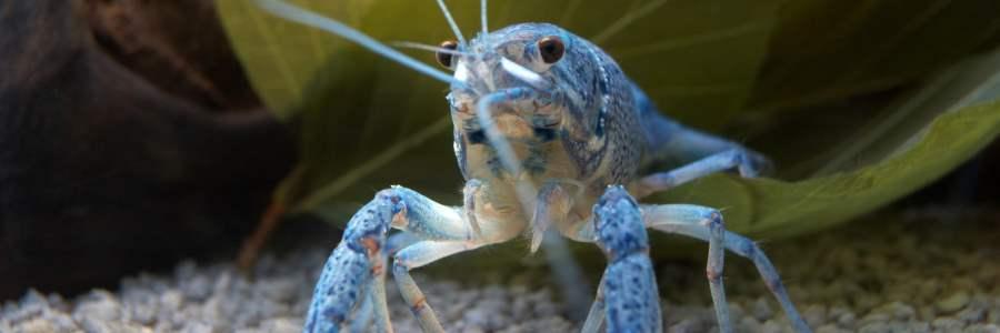 Ausflug bei schlechtem Wetter auf Borkum: Aquarium