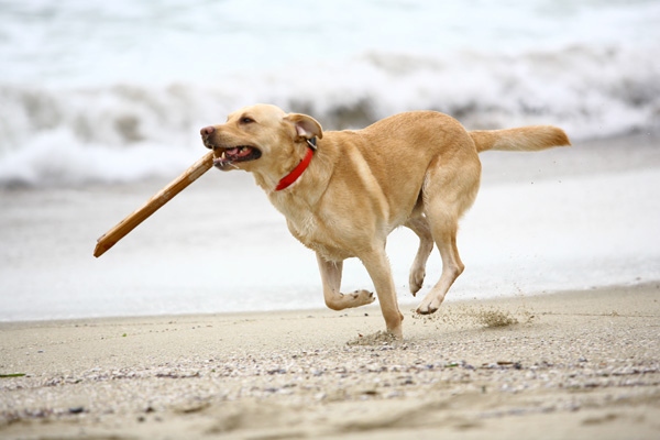 Hundestrand in Norden-Norddeich