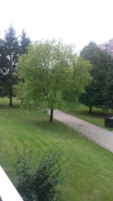 Harz Urlaub mit Ihrem Hund  genießen  - Altenau