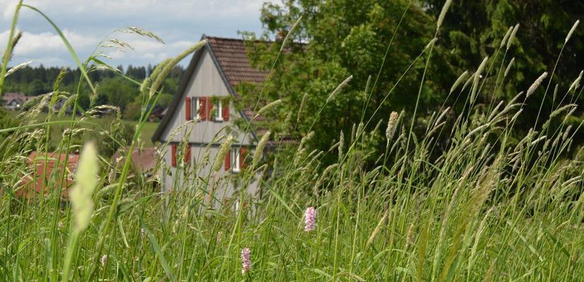 Ferienhaus tomGalme, Ferienwohnung norderGalm - Buntenbock