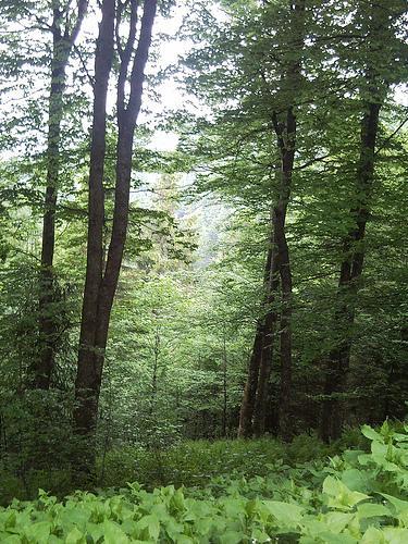 Stadtwald Freiburg