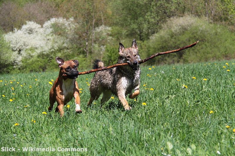 Hundewald in Wildemann