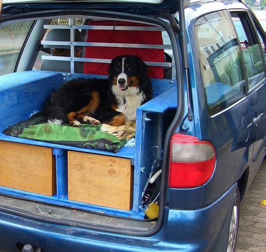 Auto mit Hund