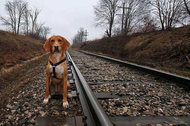Hund an einer Bahnschiene