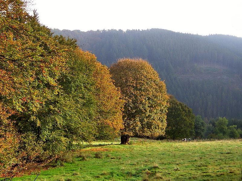 Die Eifel im Herbst