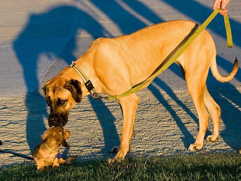 Hund groß und klein