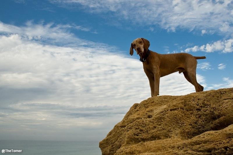Hund Klippe
