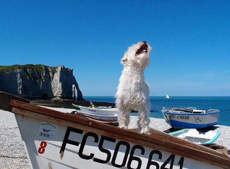 Hund passt auf ein Boot auf
