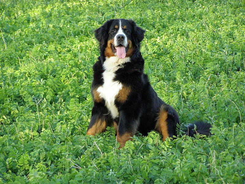 Hund Feld