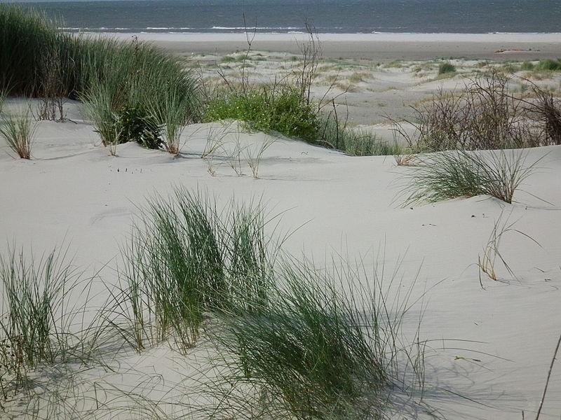 Weißdüne Juist in Ostfriesland