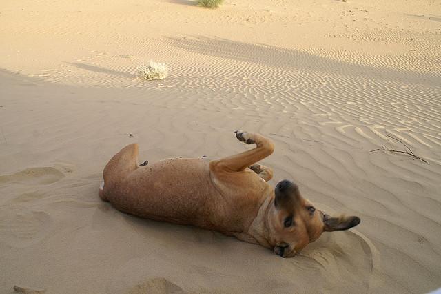 Hund Urlaub