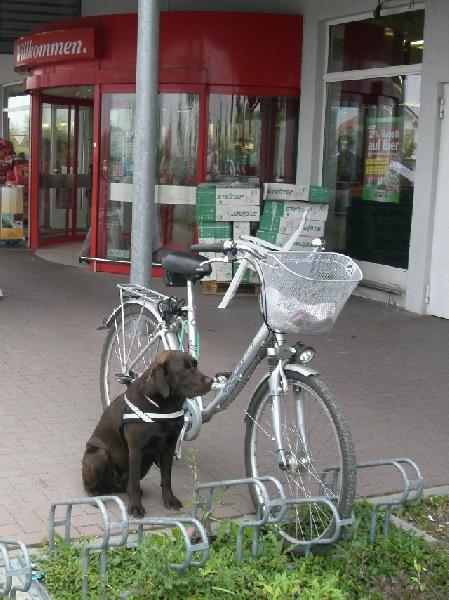 Hund bewacht Fahrrad