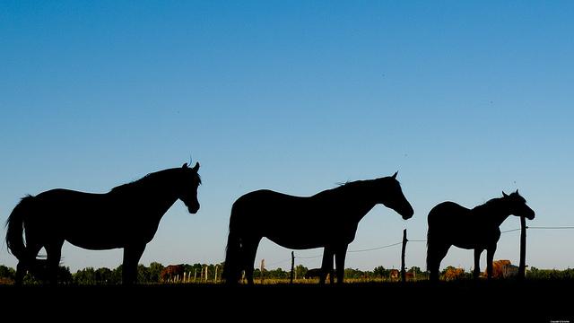 Pferde auf dem Gut Osdorf