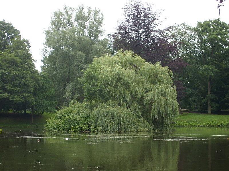 Stadtparkteich