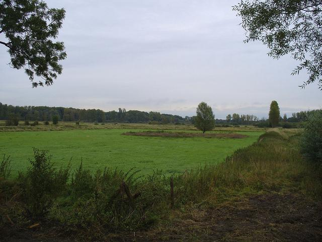 Brenner Moor in Bad Oldesloe