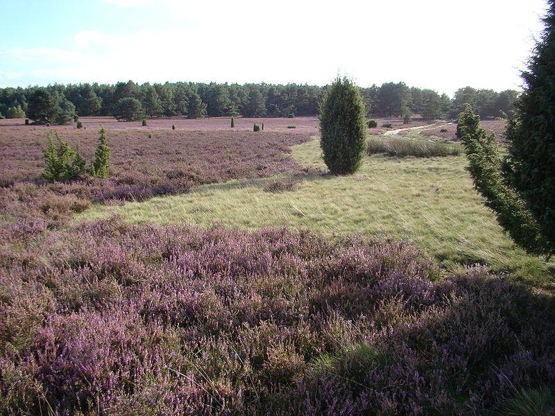 Der Naturpark Lüneburger Heide kann bei einer Wanderung, einer Radtour oder einem Ausritt erkundet werden
