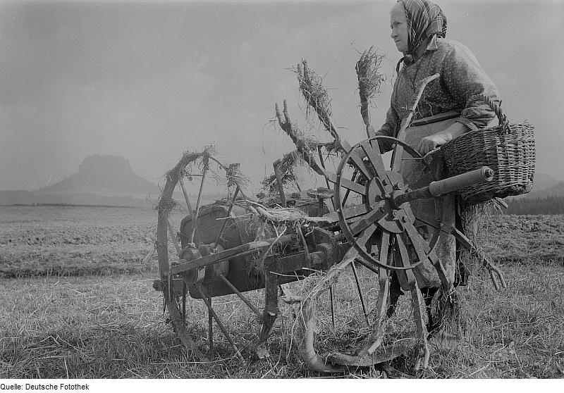 Bäuerin mit Kartoffelroder auf einem Acker (nach 1945)