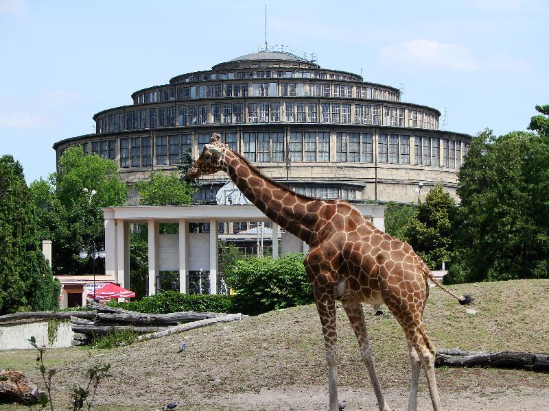 Breslauer Zoo mit der Jahrhunderthalle im Hintergrund (UNESCO Welterbe)