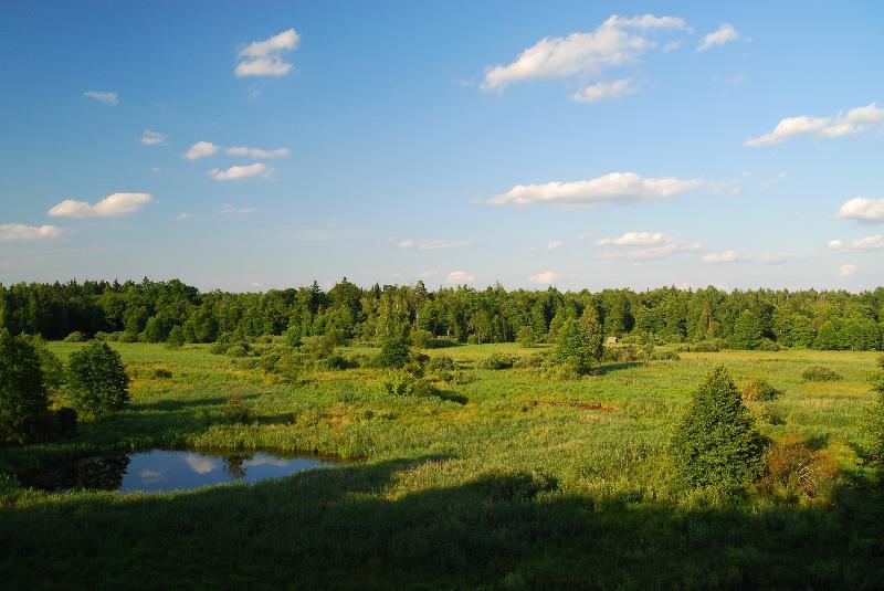 Białowieski park narodowy - krajobraz