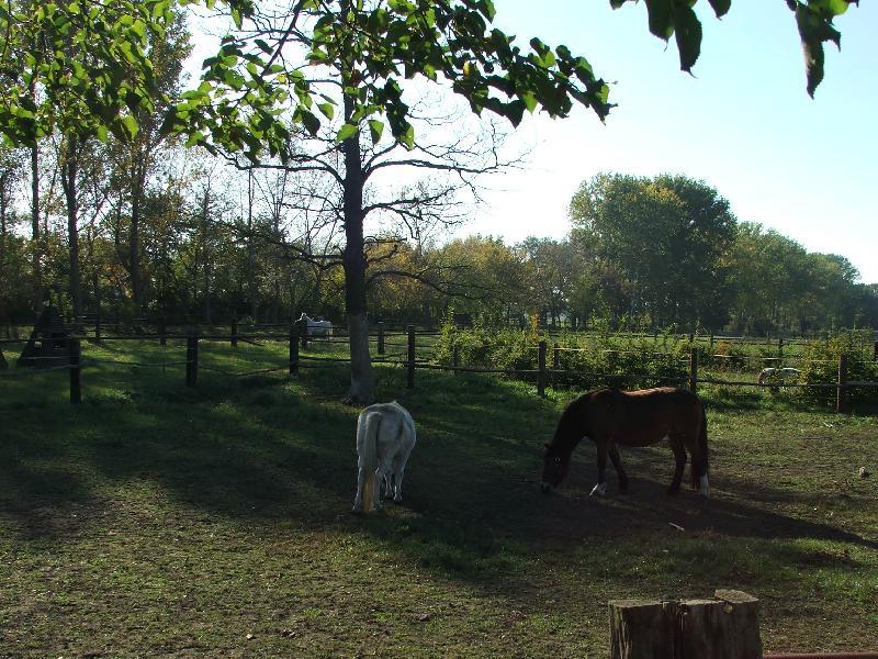 Pferdehof in Muhlitz