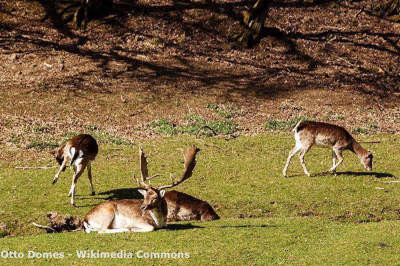 Wildparks im Sauerland