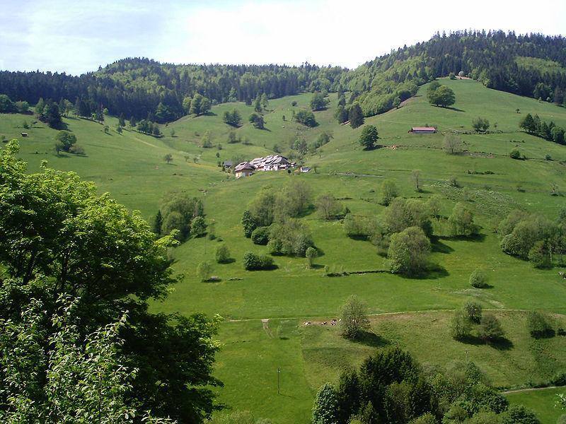 Grüner Schwarzwald