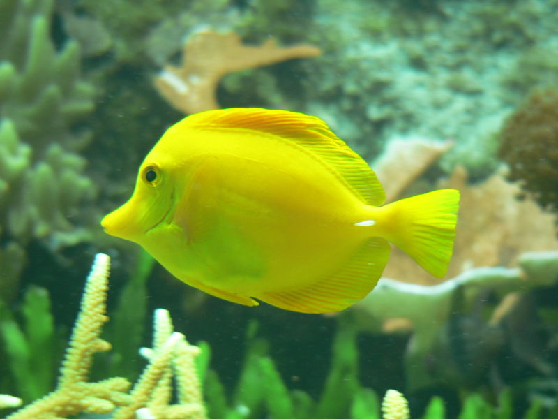 Fisch im Sylt Aquarium