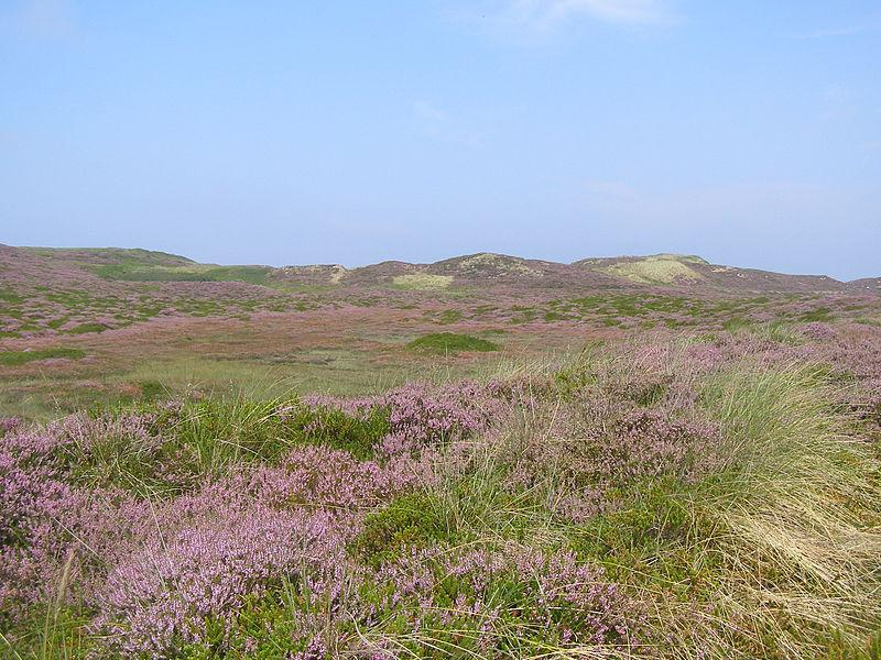 Braderup Heath