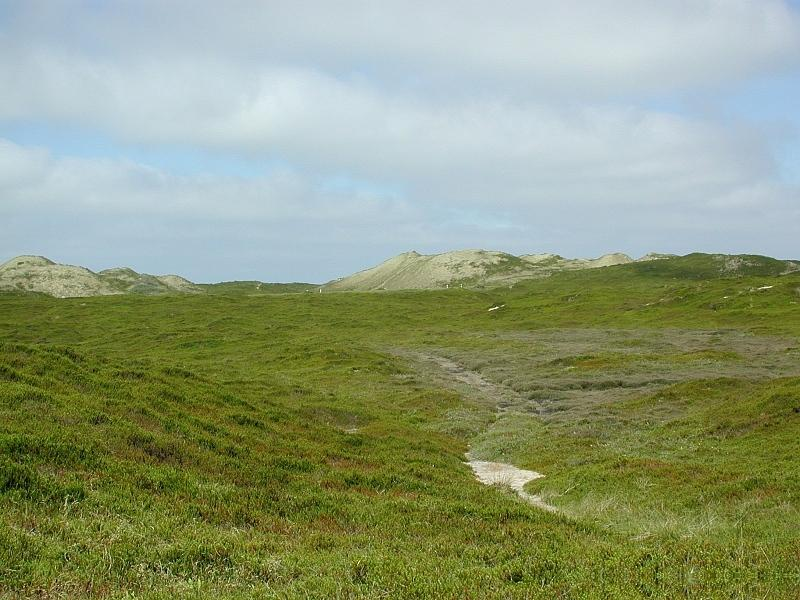 Der Kliffweg in Sylter Landschaft
