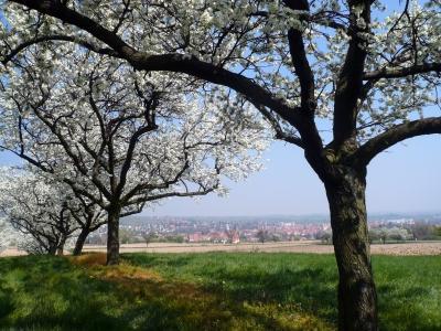 Die Landschaft des Elsass